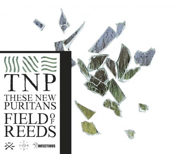 fieldofreeds