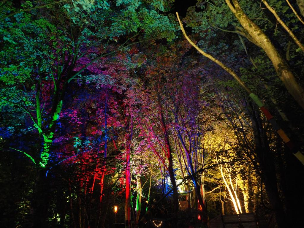 2015 Stendhal Festival Treeluminations